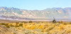 Death Valley National Park - D1-C1#2-30091 - 72 ppi-3