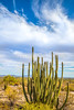 Organ Pipe Cactus National Monument - D1-C2-0121 - 72 ppi