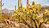 Organ Pipe Cactus National Monument - D1-C2-0059 - 72 ppi-2