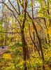 Katy Trail near Rocheport, Missouri - 11-9-13 - C2-0146 - 72 ppi-2 (2)