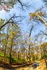 Trails near Missouri River west of St  Louis - C2-0253 - 72 ppi