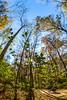 Trails near Missouri River west of St  Louis - C2-0338 - 72 ppi