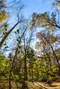 Trails near Missouri River west of St  Louis - C2-0337 - 72 ppi