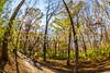 Trails near Missouri River west of St  Louis - C2-0311 - 72 ppi