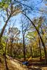Trails near Missouri River west of St  Louis - C2-0305 - 72 ppi
