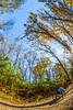 Trails near Missouri River west of St  Louis - C2-0233 - 72 ppi