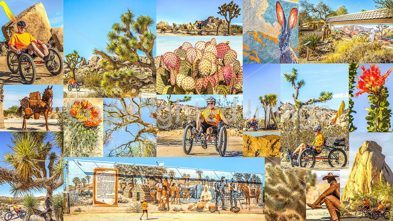 Joshua Tree, California - JPEG - final