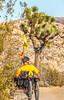 Joshua Tree National Park - 2016 -D1- C1-0052 - 72 ppi