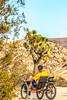 Joshua Tree National Park - 2016 -D1- C1-0049 - 72 ppi