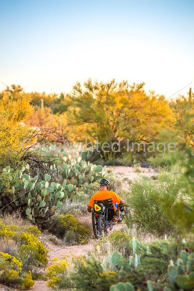 Saguaro National Park - C1-0304 - 72 ppi