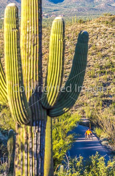 Saguaro National Park - C1-0018 - 72 ppi