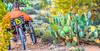 Saguaro National Park - C3-2 - 72 ppi-13