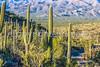 Saguaro National Park - C2-0052 - 72 ppi