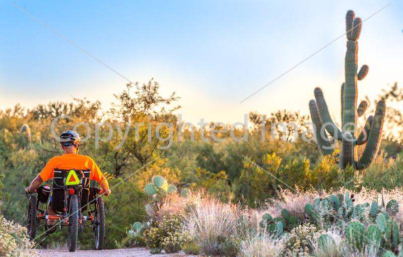 Saguaro National Park - C1-0337 - 72 ppi