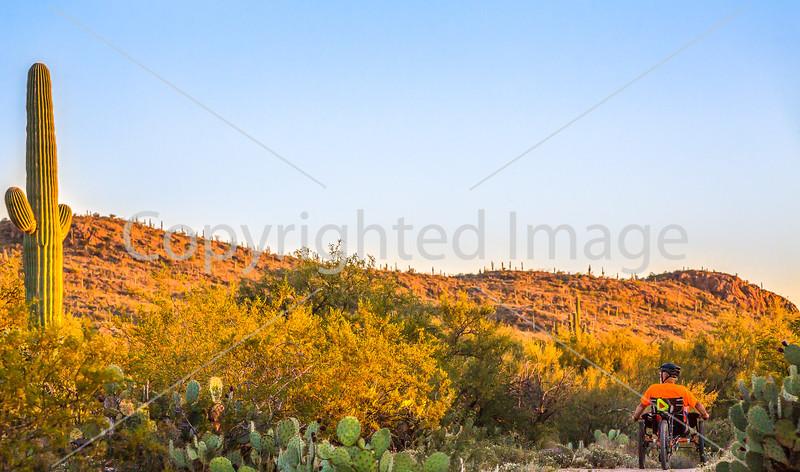 Saguaro National Park - C1-0293 - 72 ppi-2