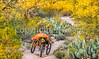 Saguaro National Park - C3-2 - 72 ppi-6