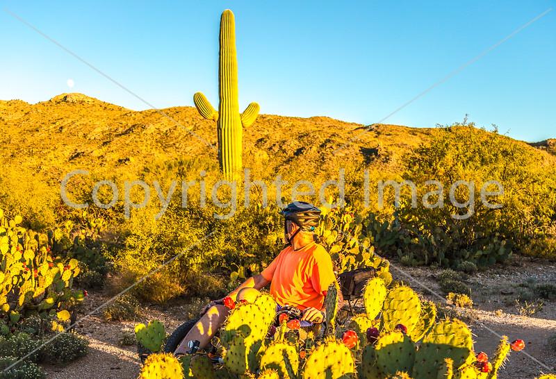 Saguaro National Park - C3-0034 - 72 ppi-2