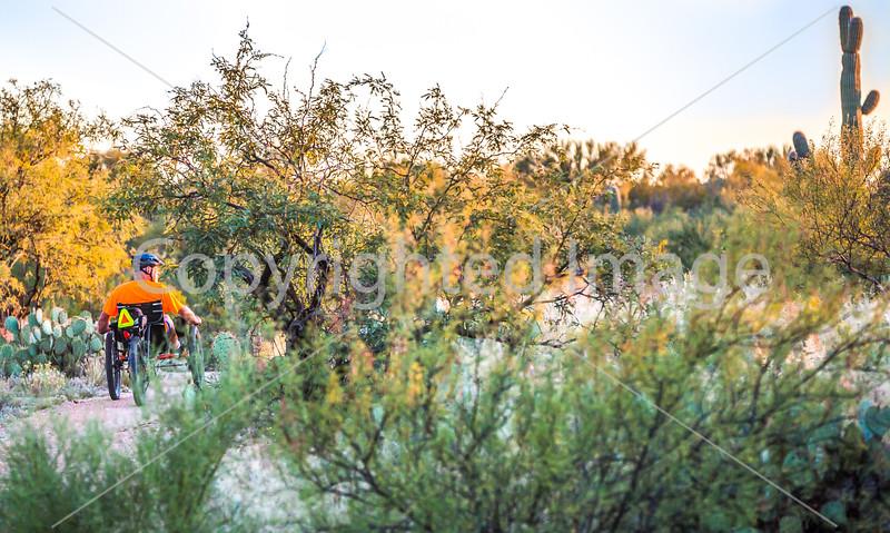 Saguaro National Park - C1-0326 - 72 ppi