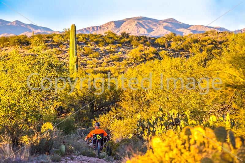 Saguaro National Park - C1-0189 - 72 ppi