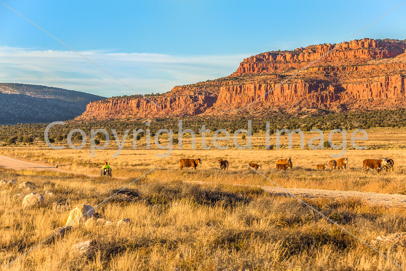 Vermilion Cliffs National Monument - C1-0093 - 72 ppi