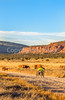 Vermilion Cliffs National Monument - C1-0056 - 72 ppi