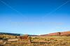 Vermilion Cliffs National Monument - C3-0053 - 72 ppi