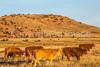 Vermilion Cliffs National Monument - C1-0170 - 72 ppi