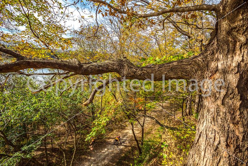 Katy Trail along Missouri River near Rocheport, MO - C2-0461 - 72 ppi
