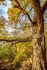 Katy Trail along Missouri River near Rocheport, MO - C2-0476 - 72 ppi