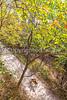 Katy Trail along Missouri River near Rocheport, MO - C2-0412 - 72 ppi