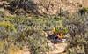 Grand Staircase-Escalante National Monument - C1-0112 - 72 ppi-3