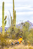 Organ Pipe National Monument in Arizona - C1-0067 - 72 ppi