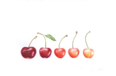 """""""Cherry Rainbow"""" (watercolor) by Olga Koelsch"""