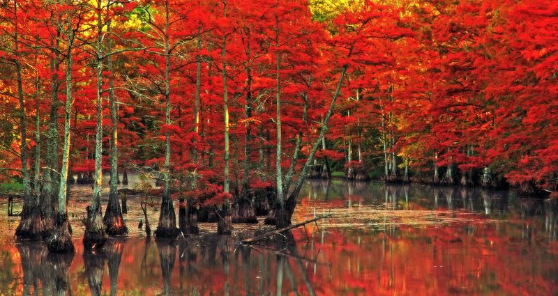 """Fall on Cache Bayou"" (photography) by Lynn Reinbolt"