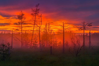 """Misty twilight in the swamp."" (photography) by Fedor Lashkov"