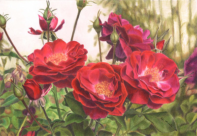 """Nature's Bounty"" (colored pencil) by Robin Manelis"