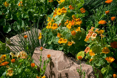 Red Butte Gardens Tour - Salt Lake City