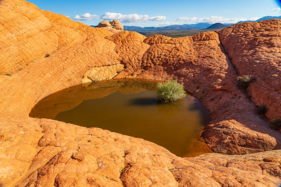 Rain Fills this Seasonal Pond in the Red Cliffs Desert Reserve