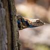 Lizard Look