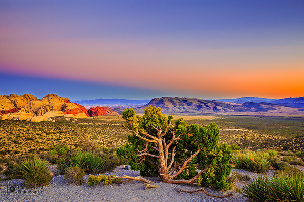 """Junipers over Vegas,"" Red Rock Canyon National Conservation Area"