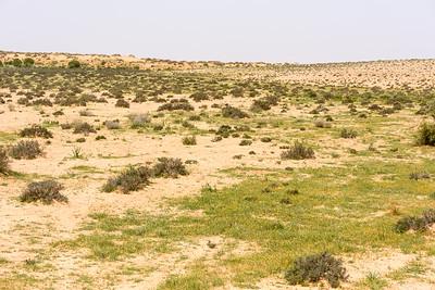 Wadi på vej 211 østpå imod Egyptengrænsen, sydøst for Be'er Sheva