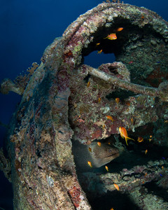 Eel on the Thistlegorm Wreck