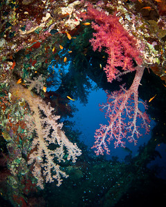 Soft corals on the Dunraven