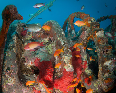 Thistlegorm winch with anthias and soft corals