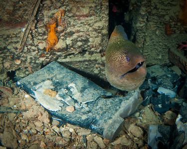 Eel guarding a Wellington Boot on the Thistlegorm Wreck