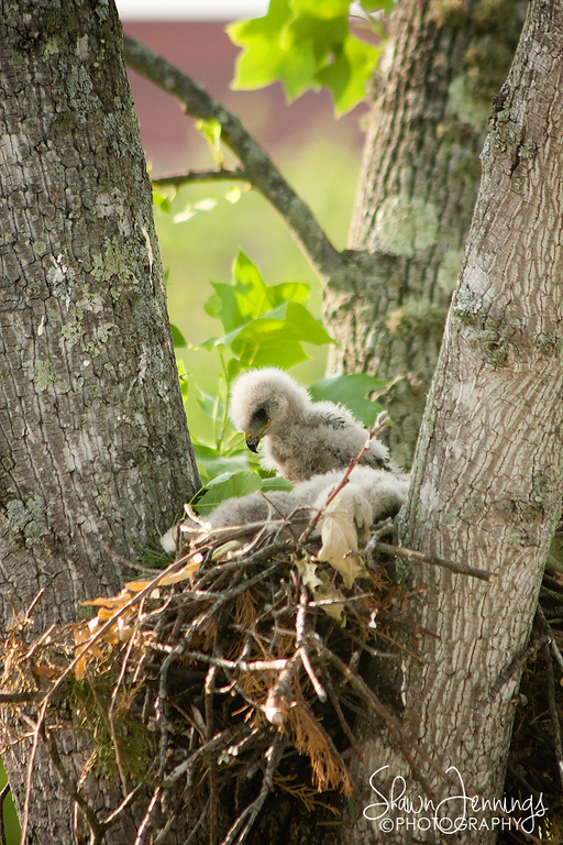 Today when we returned to work there were only two babies left in the nest with the parents nearby.