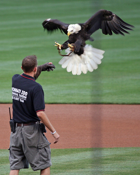 It was Bald Eagle Day!