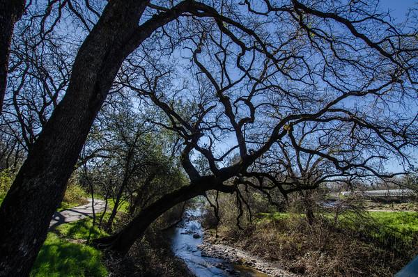 Sacramento River trails in Redding, California