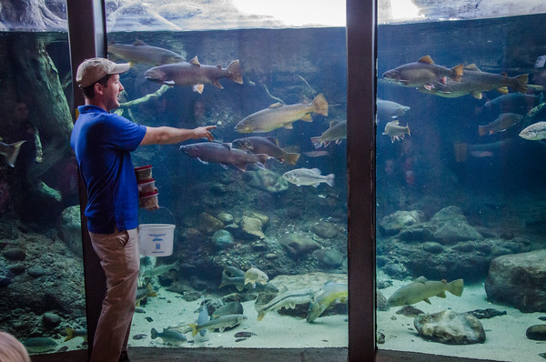 Fish feeding demo at Turtle Bay Exploration Park in Redding, California