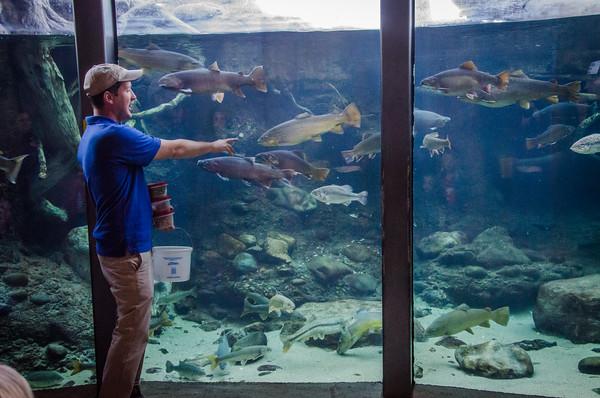 Fish feeding demo at Turtle Bay Exploration Park in Redding, California
